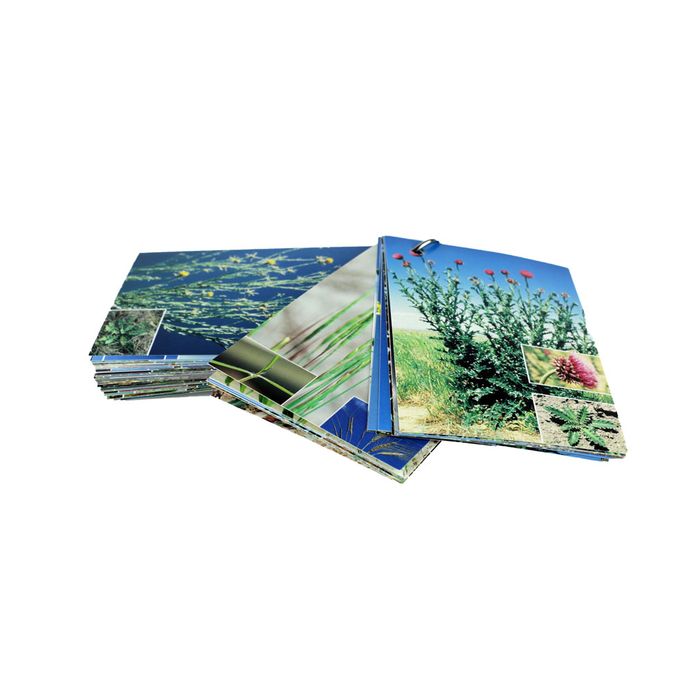 Weed Information Cards, Box of 25