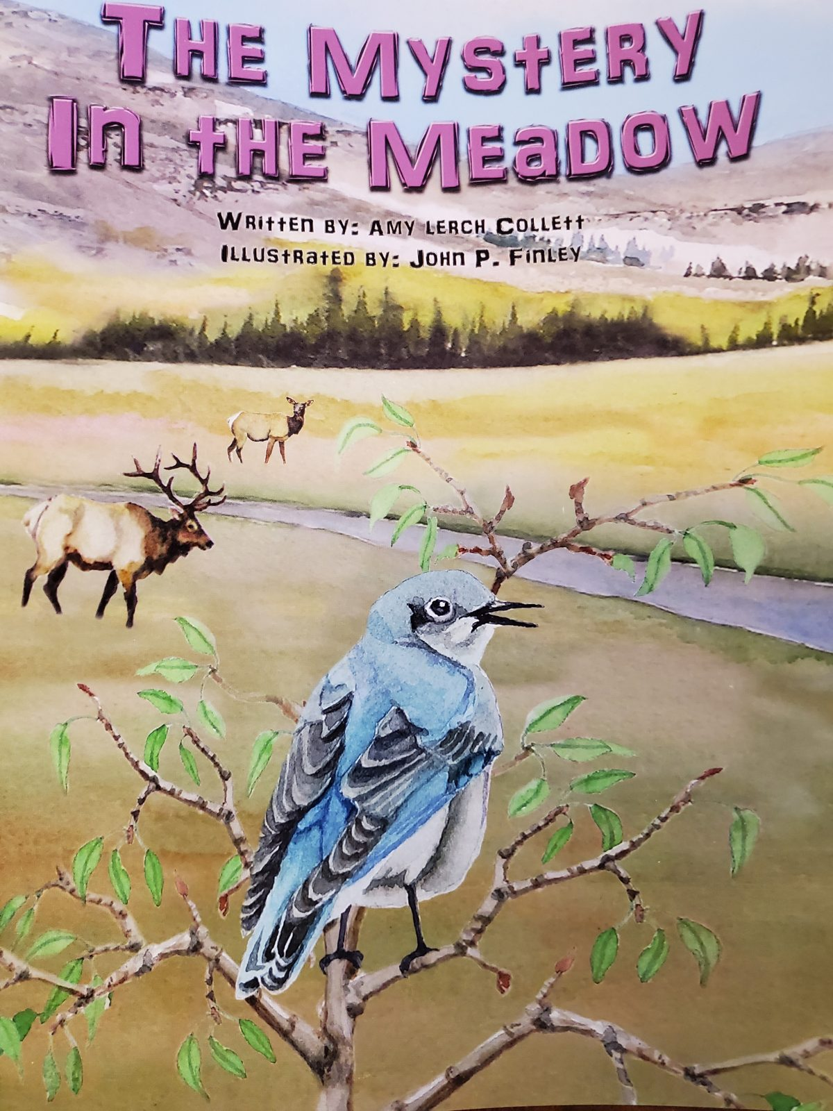 Mystery in the Meadow, By Amy Collett and John Finley